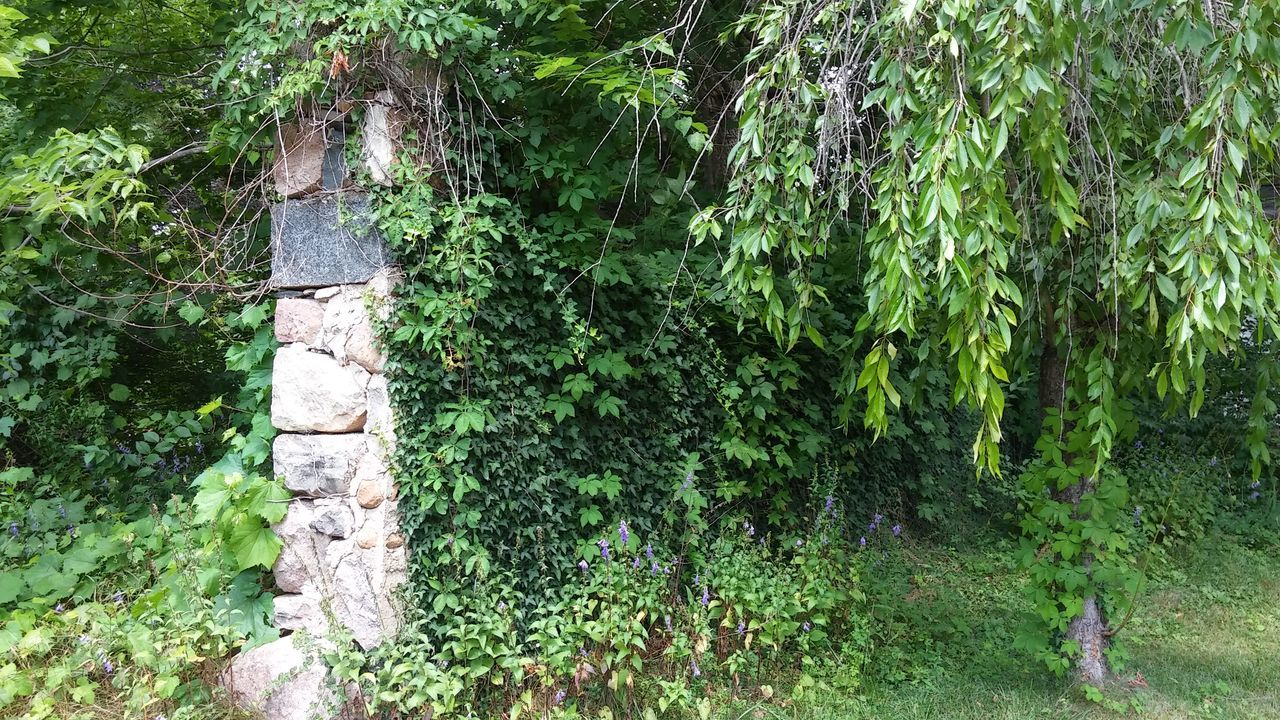 Nature Trees And Rocks Trees And Bushes Trees And Leaves Trees And Nature Nature_collection Nature Photography Brick Wall Old Brickwork