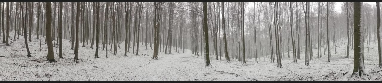 Beauty In Nature Black And White Bükk Bükk National Park Hungary Mountain Nature No People Outdoors Snow Tree Winter