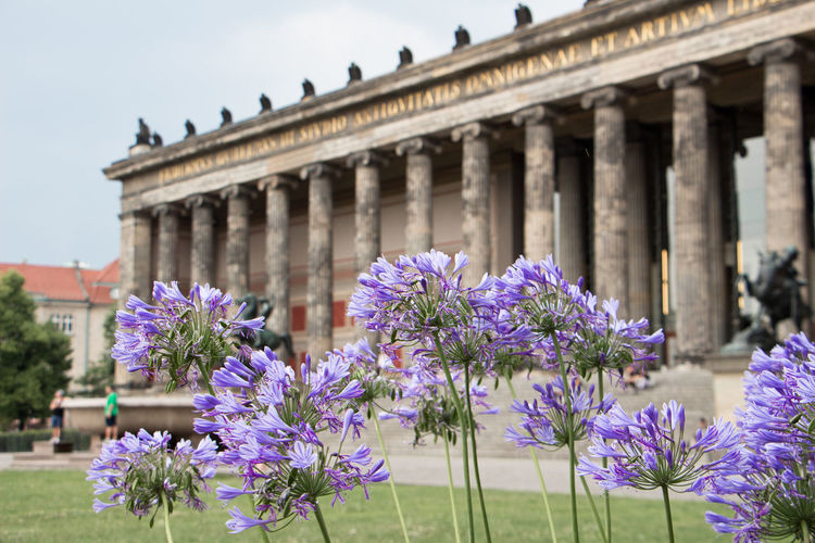 Museum Island Architecture Berlin Berlin Love Berlin Photography Nature Travel Architectural Column Architecture Building Exterior Built Structure Flower History Museumisland Old Buildings Outdoors Tourism Travel Destinations