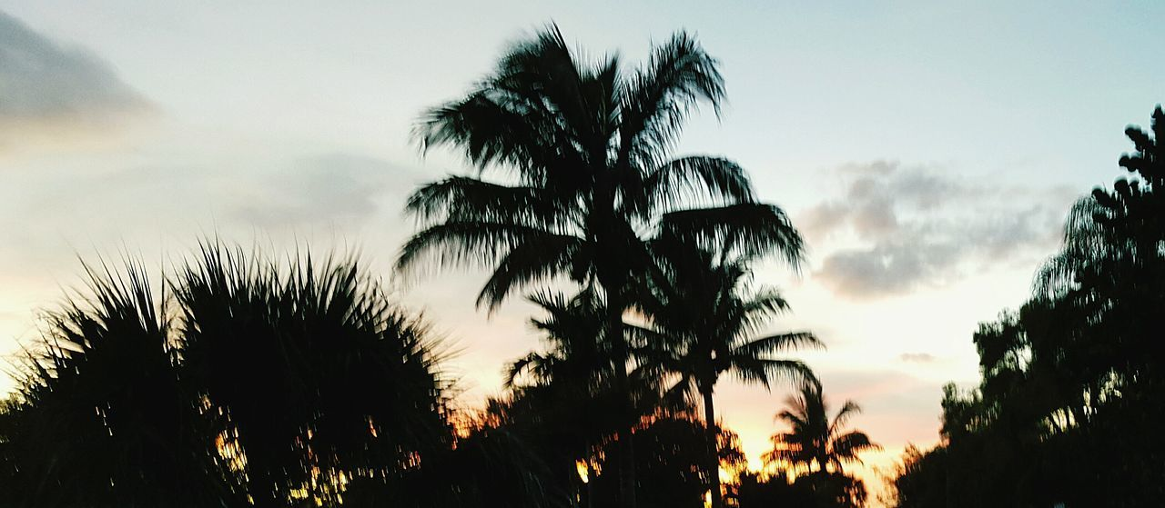 sky, tree, sunset, growth, nature, silhouette, palm tree, no people, beauty in nature, scenics, low angle view, tranquility, tranquil scene, outdoors, plant, close-up, day