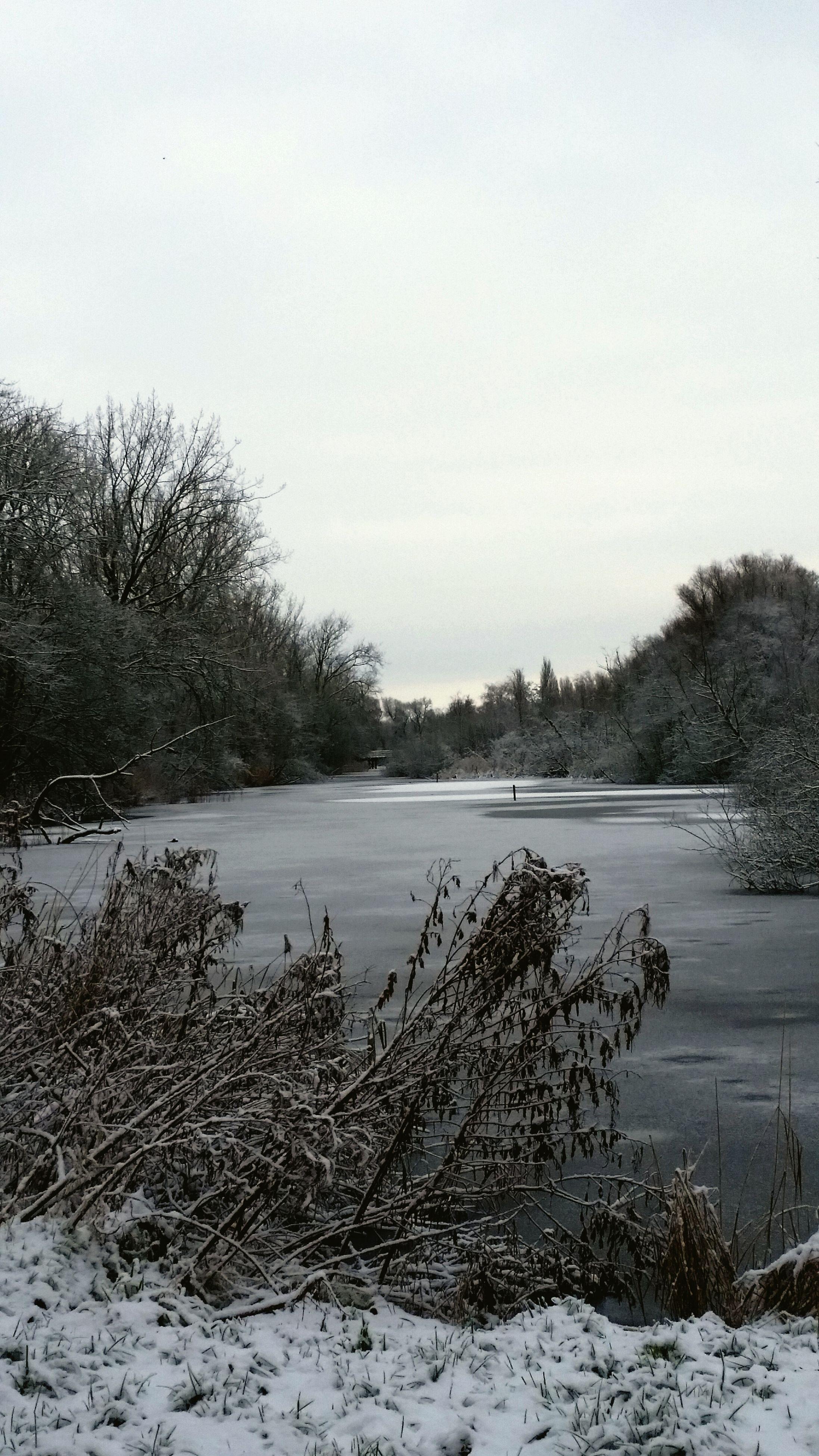 tranquil scene, tranquility, tree, lake, winter, scenics, water, snow, cold temperature, beauty in nature, nature, clear sky, landscape, sky, bare tree, non-urban scene, river, season, lakeshore, idyllic