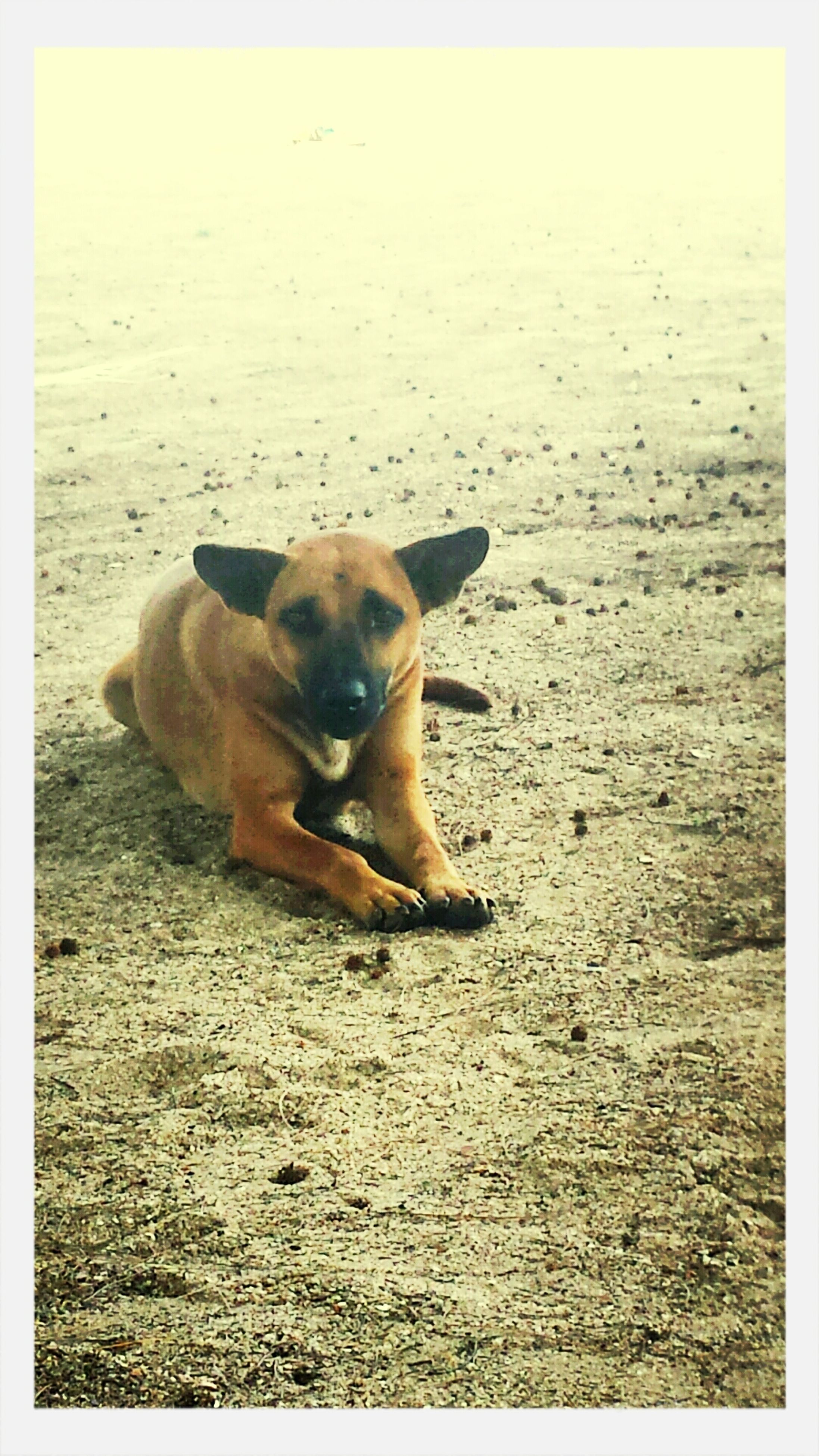 dog, animal themes, one animal, sand, beach, domestic animals, pets, mammal, transfer print, auto post production filter, shore, nature, full length, relaxation, sea, sunlight, tranquility, outdoors, tranquil scene, day