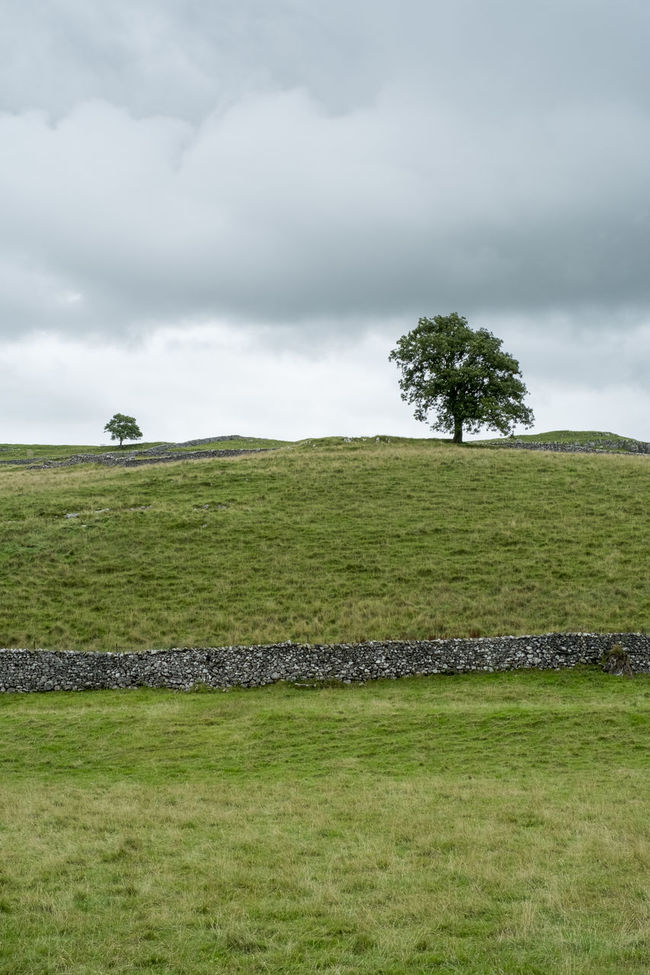 Settle, Yorkshire Dales Beauty In Nature Day Grass Hiking Landscape Meadow Nature Outdoors Scenic Scenics Tranquility Tree Trees Walking Yorkshire Yorkshire Dales