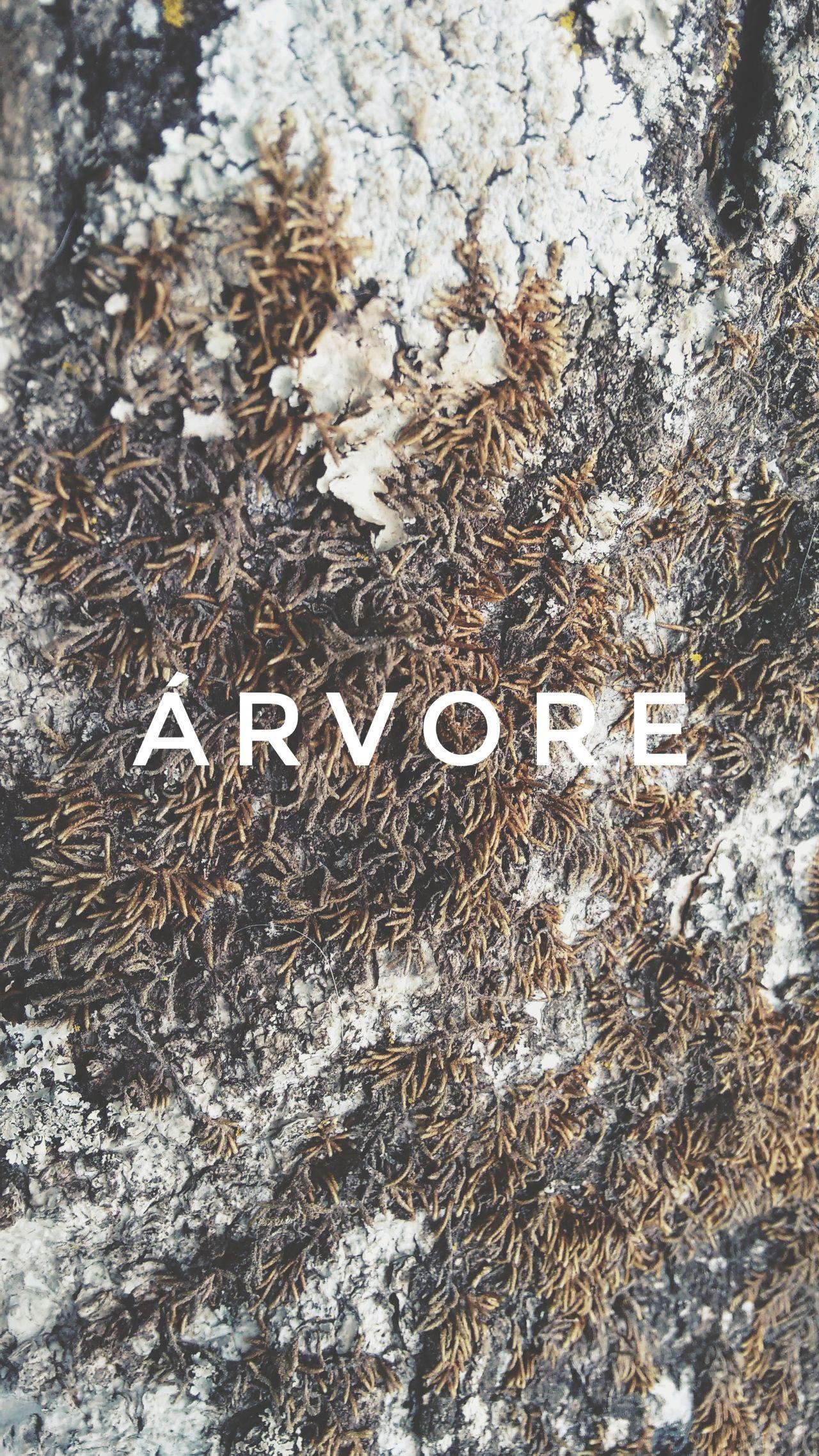 Maximum Closeness Arvore Tronco Casca Perto Nature