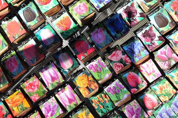 Oksk Photopackers Netherlands Amsterdam Flower Tulips Tulips🌷