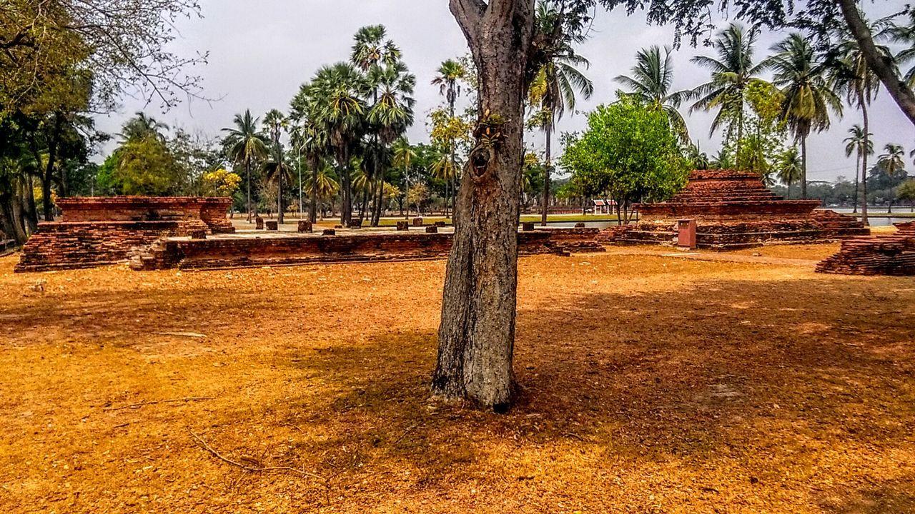 First Eyeem Photo Sukhothai, Thailand History Tree Temple Ancient Sukhothaihistoricalpark Sukhothai Historical Park SukhothaiDynasty Temples Temple Architecture Unesco UNESCO World Heritage Site Unesco World Heritage Unescoworldheritage