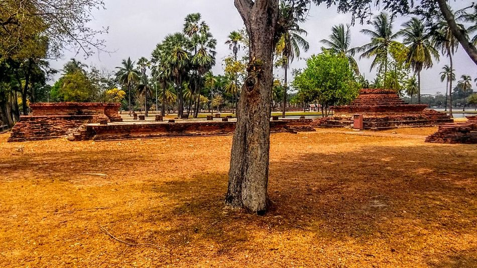 First Eyeem Photo Sukhothai, Thailand History Tree Temple Ancient Sukhothaihistoricalpark Sukhothai Historical Park SukhothaiDynasty Temples Temple Architecture Unesco UNESCO World Heritage Site Unesco World Heritage Unescoworldheritage
