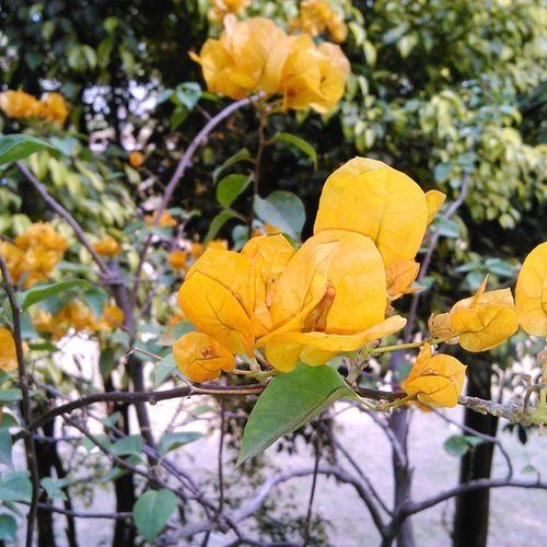 No_edits Flowers