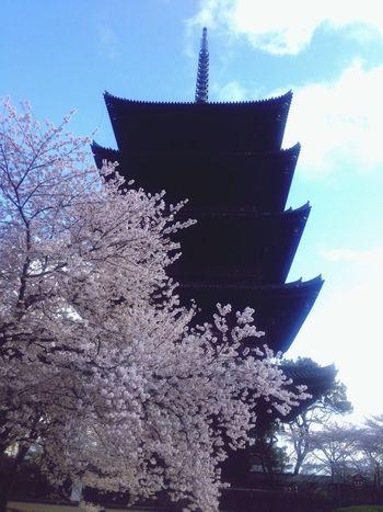 Temple with Sakura at Kyoto