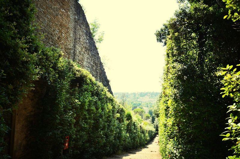 Bobli Gardens Florence Gardens Nikon
