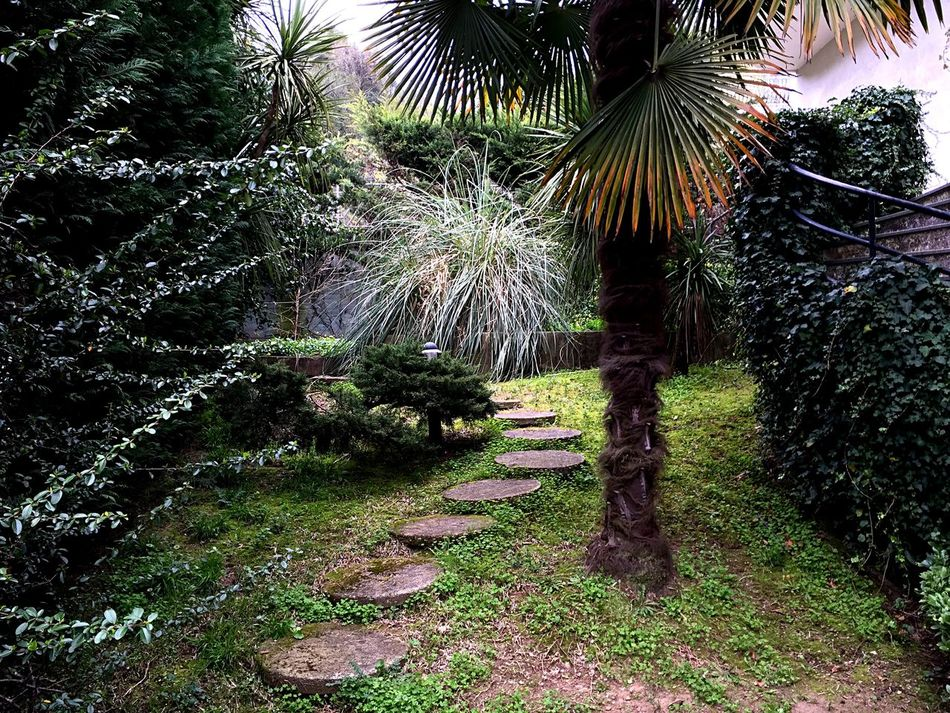 Garden my garden Trees