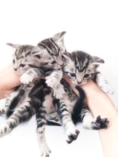 My kitten. Cats Cat Kitten Cute