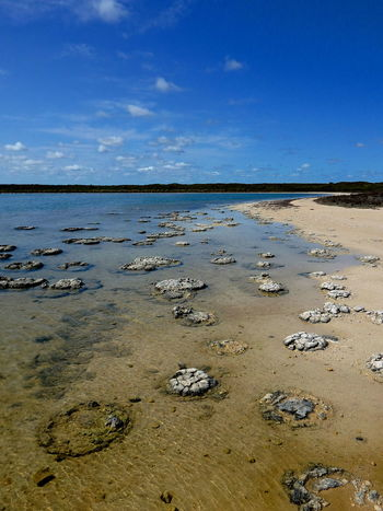 Stromatolites - the oldest life form on the planet Beach Coastline Distant EyeEm Nature Lover Horizon Over Water Nature Nature_collection Ocean Outdoors Sand Sea Shore Stromatolites Summer Surf Tropical Climate Vacation Vacations Water Wave