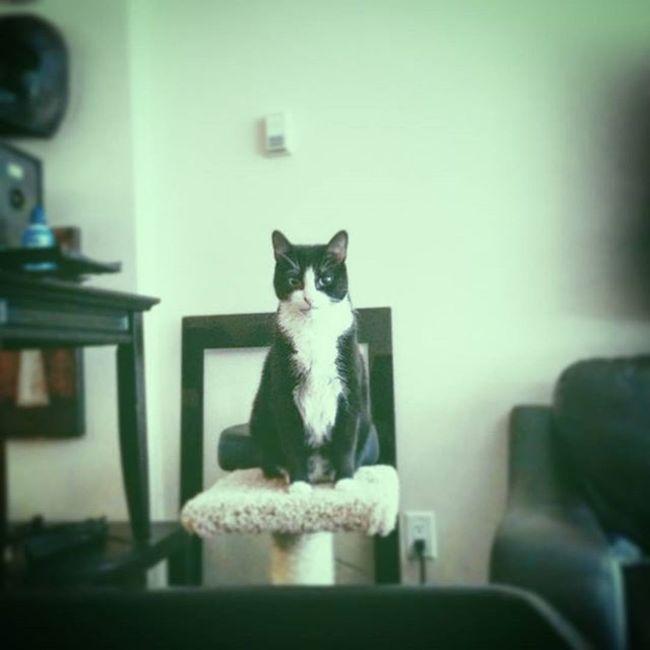 WHERE'S WENDY Instagram Soullessphotography Phoneography Retrica Cat Rosario Waiting Wondering Worrying Ripwendy EyeEm