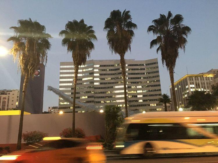 Palm Tree Tree Architecture Built Structure Car Street City Building Exterior Transportation Road No People Outdoors Sky Day