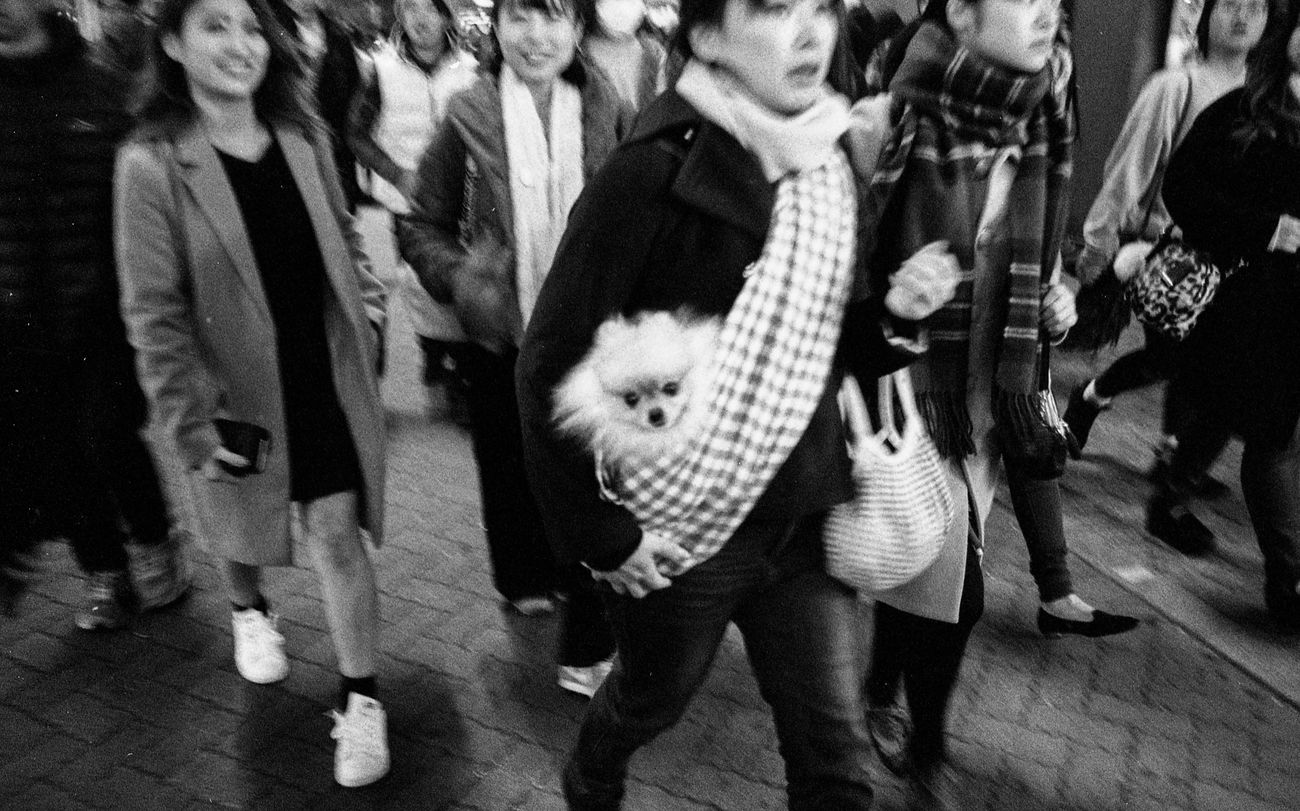 Japan 002 Japan Photography Japan Train Tokyo,Japan Tokyo EyeEm Leicam6 Leicacraft Leicam Leica Ishootfilm Streetphoto_bw Black And White Photography Filmphotography Street Photography Black And White Filmisnotdead People Of EyeEm Believeinfilm EyeEmMalaysia People Streetphotography Real People Dog Animal Themes The Street Photographer - 2017 EyeEm Awards