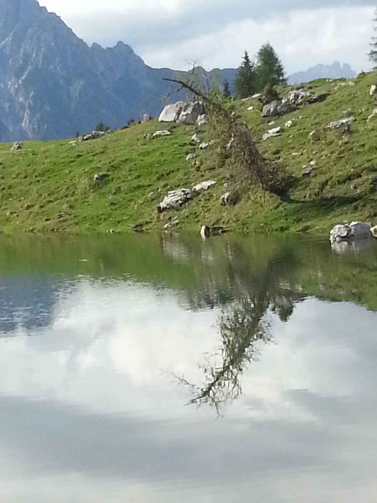 Tree in mirror Water Reflections Mountains Sauris Trees