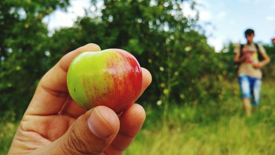 Beautiful stock photos of ankara, Apple - Fruit, Casual Clothing, Cropped, Day