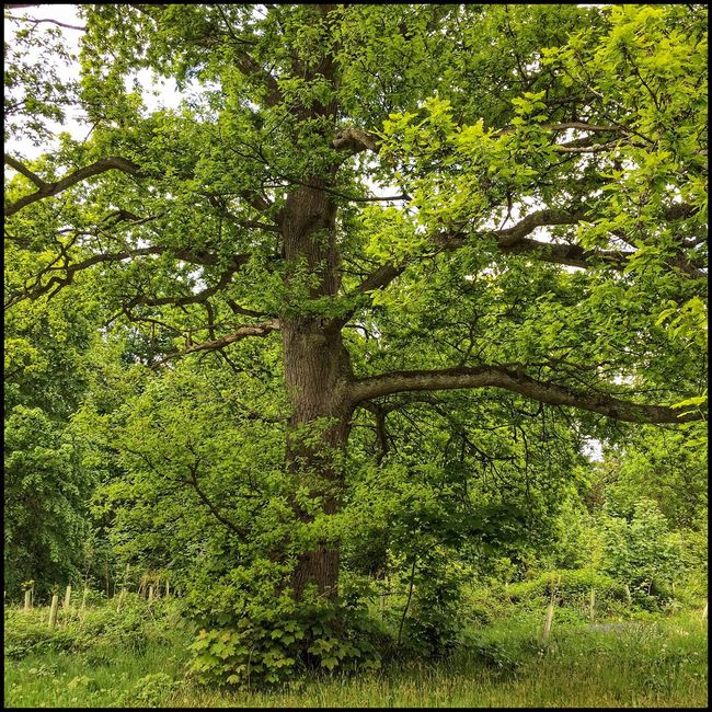 Summer Green Enjoying Nature Tree_collection  Textures And Surfaces Scotland Flaneur Nature Garden Photography