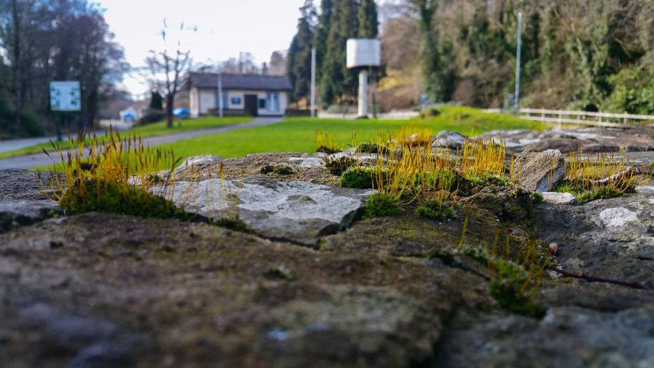 Moss on a Stone Wall in Wales UK No People Nature Tree Outdoors Day Architecture Water Tower Station Steam Railway Cracked Cracks Welshpool Winter Close Up