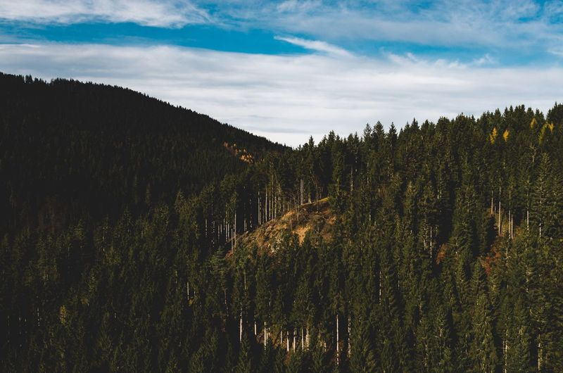 explore /: black forest 2016 Nature Tranquility Sky Growth Tree Tranquil Scene Beauty In Nature No People Outdoors Scenics Landscape Forest Day Grass