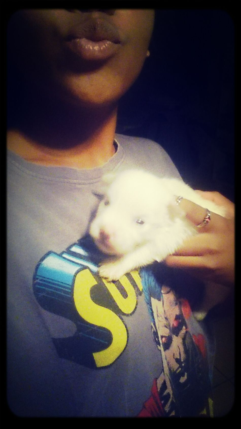 this puppy is tooo cute Puppy Picoftheday Cute Love
