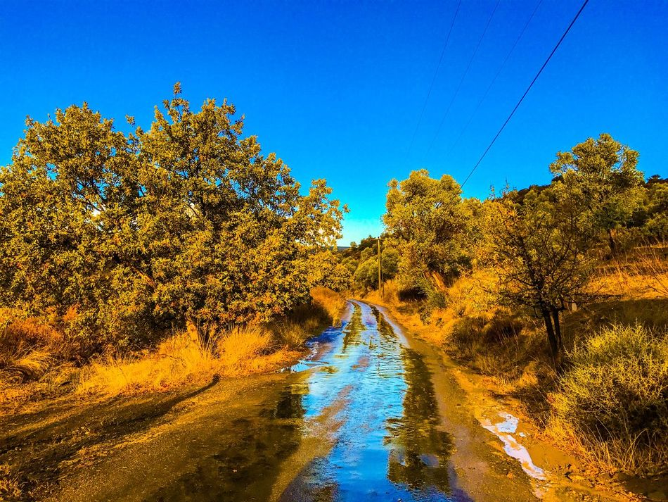 Tree Water Blue Nature Reflection Scenics Tranquility Sunlight Outdoors Beauty In Nature Clear Sky Sky River Day Rain Cloud Cloudy Village Autumn