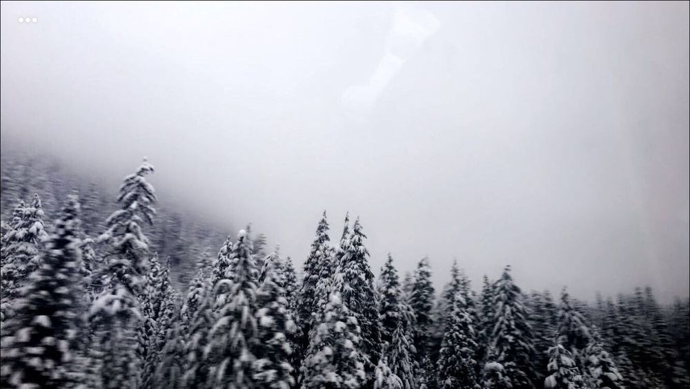 Winter Nature Weather No People Landscape Beauty In Nature Fog Tree Mist Outdoors Cold Temperature Hazy  Sky Winter Is Coming... Snow