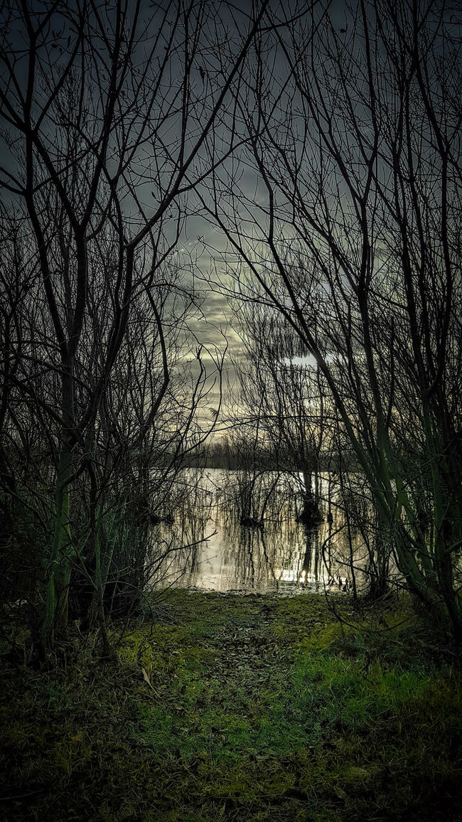 Drawn to the water, but what lies beneath Bare Tree Dark Darkness And Light Essex EyeEm Gallery Framed Gothic Light And Shadow Lightroom Moody Moody Sky Nightmare Underneath Water Water_collection Winter