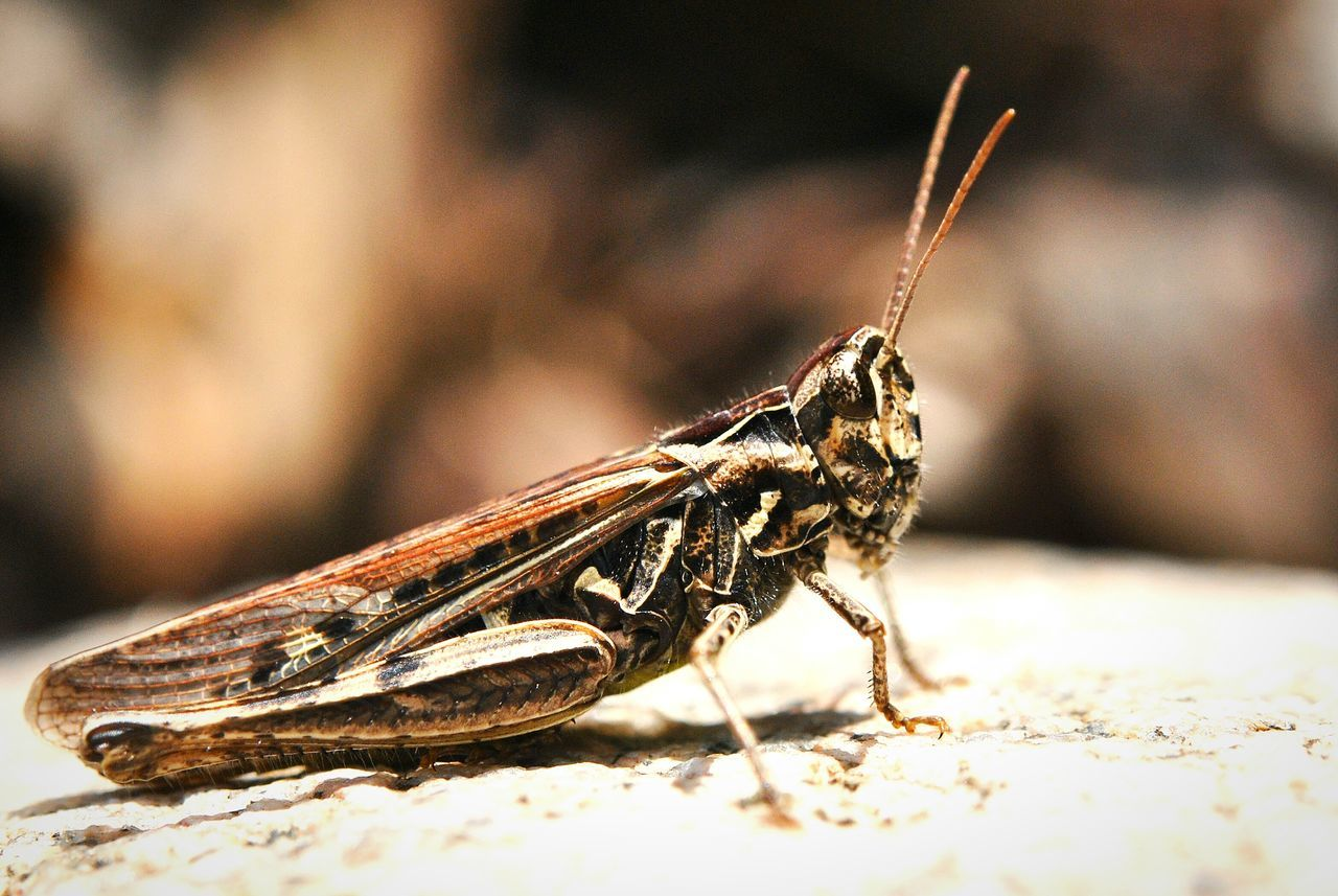 Grasshopper Grasshopper Insect Nature Grasshoppers Up Close Nature Nature_collection Naturelovers Makro Makro Photo Insect Photography Insect Macrophotography