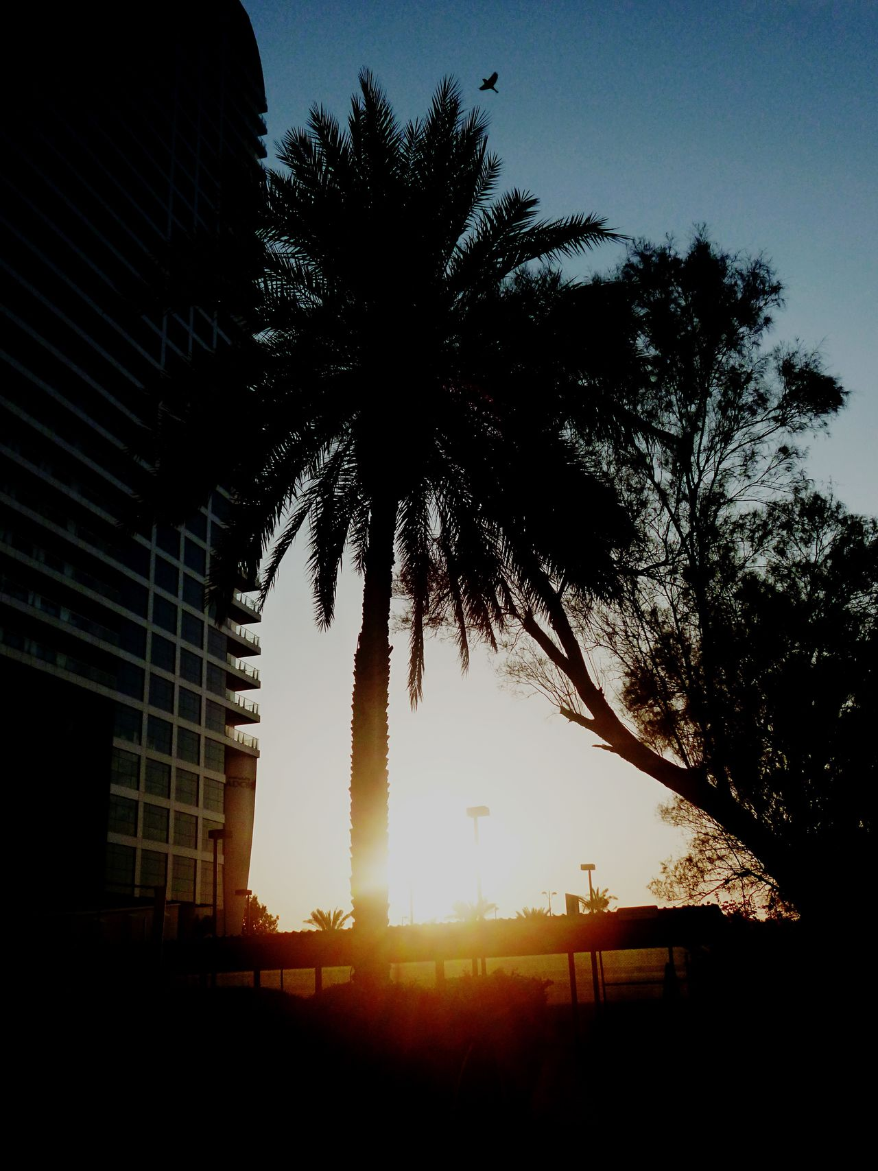 Beautiful Sunset at the Abu Dhabi British Embassy next to the Ambassador House Palm Trees Flying Birds Beautiful Colours Red Sunset Check This Out EyeEm Best Shots - Sunsets + Sunrise Showcase: February Abu Dhabi UAE EyeEm Abu Dhabi Watching The Sunset