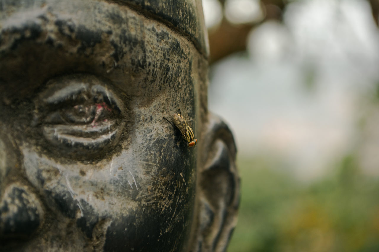 statue, sculpture, male likeness, human representation, focus on foreground, art and craft, close-up, history, no people, spirituality, day, outdoors, army