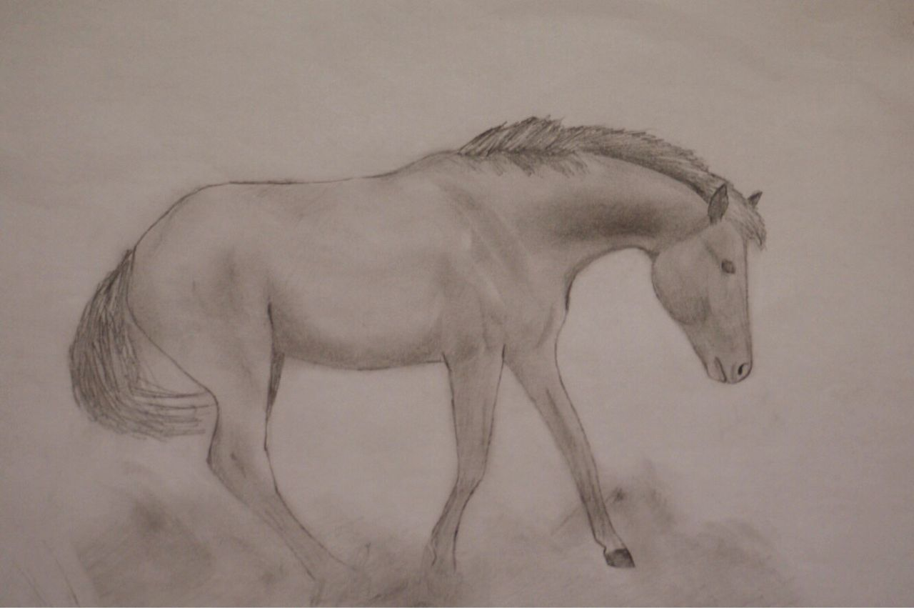 Animal Themes Mammal Nature One Animal Full Length No People Animals In The Wild Day Outdoors Beauty In Nature Nature Horse Pony Nikon Drawing - Art Product Blackandwhite Drawing ArtWork Draw Drawn Art And Craft Creativity Drawing - Activity