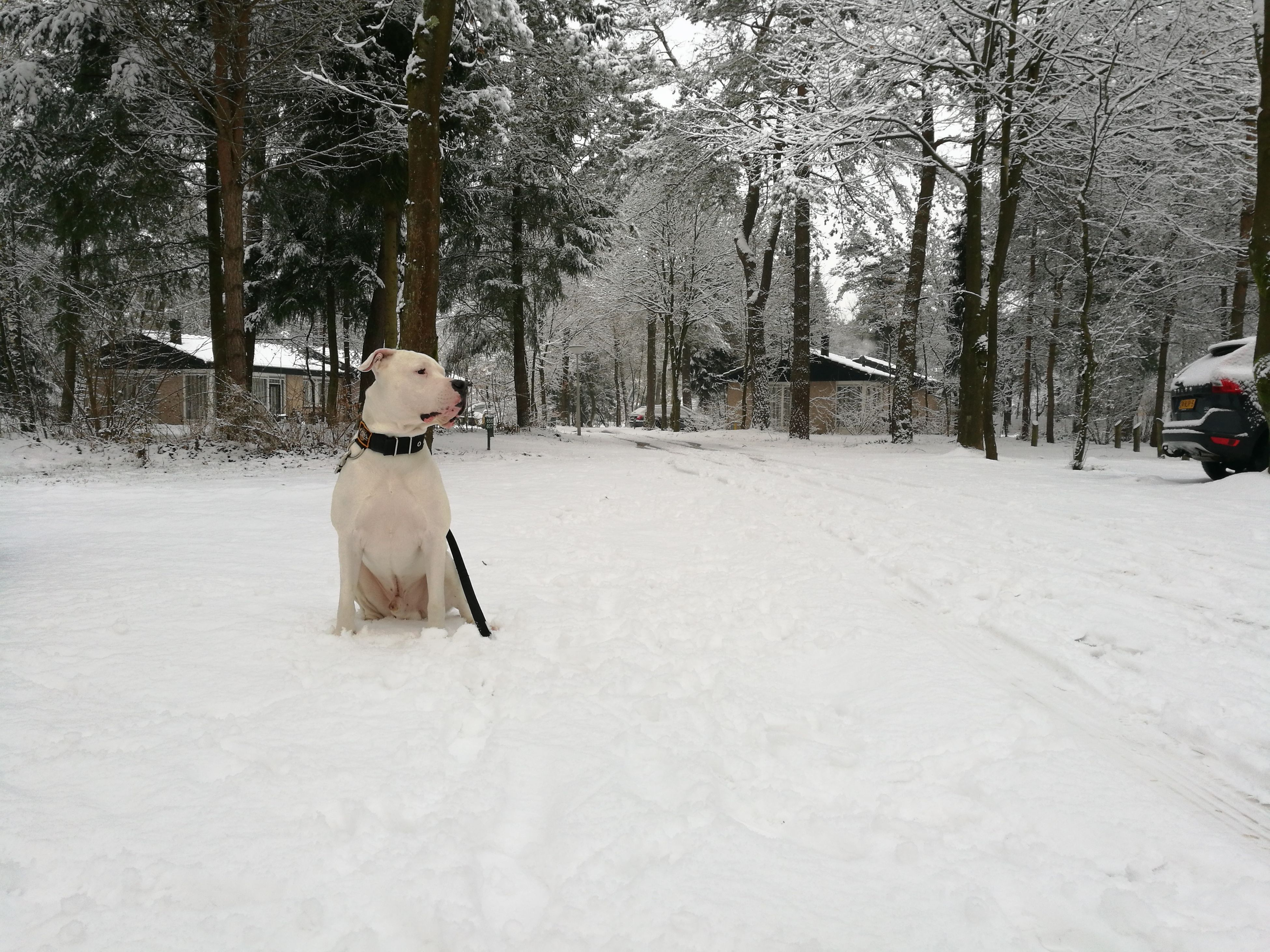 snow, winter, dog, cold temperature, pets, one animal, domestic animals, tree, white color, animal themes, mammal, weather, nature, outdoors, day, no people, bare tree, sitting, beauty in nature