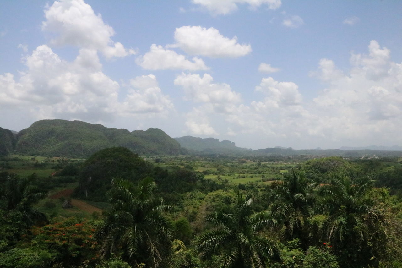 Cuba, Vinales Valley Arial View Beauty In Nature Cloud - Sky Cuba Day Forest Forrest Growth Idyllic Landscape Mountain Nature No People Outdoors Palms Scenics Sky Tranquil Scene Tranquility Tree Viñales