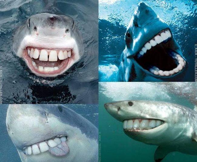 nice smile ?