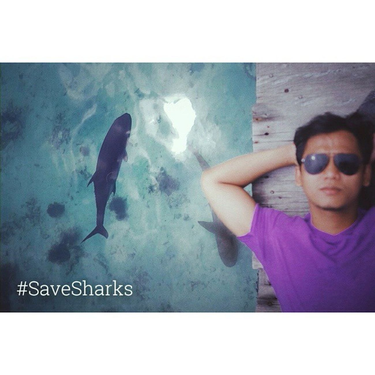 I enjoy watching sharks swim in the ocean, NOT IN MY SOUP !!! . Savesharks Lovesharks Helloworld Freedive Freediving Spearfhising Apnea Ocean Diving Holiday Backpacker Iphonesia Instagram Indonesiabeauty INDONESIA Gatgedgrapher Sharks Java Vscocam VSCO Culture Indonesiaraya
