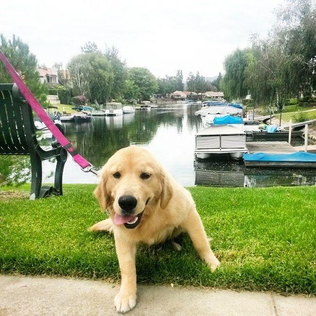 O.o Newjob Dogwhisper California