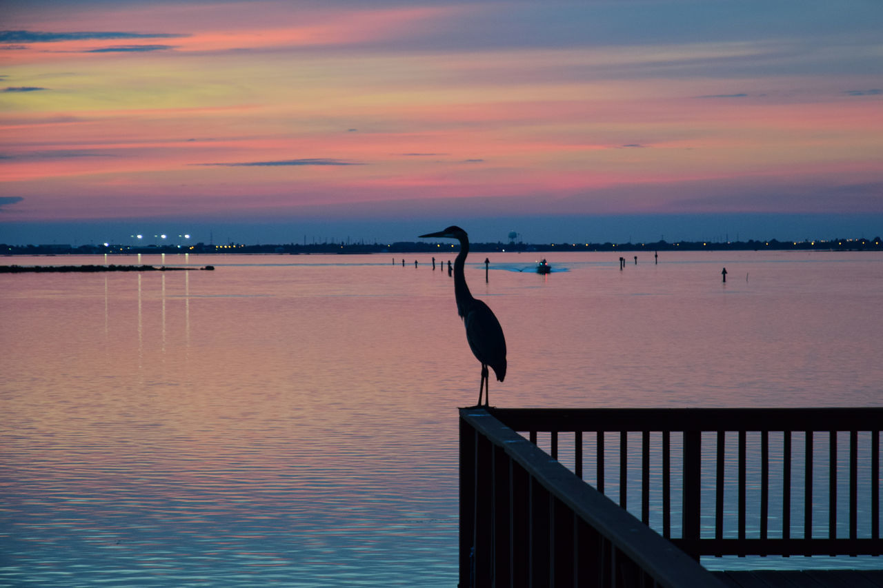 Heron perched on a deck at sunset Animal Wildlife Beauty In Nature Bird Heron Horizon Over Water Nature No People One Animal Outdoors Sea Sky Sunset Tranquil Scene Tranquility Water