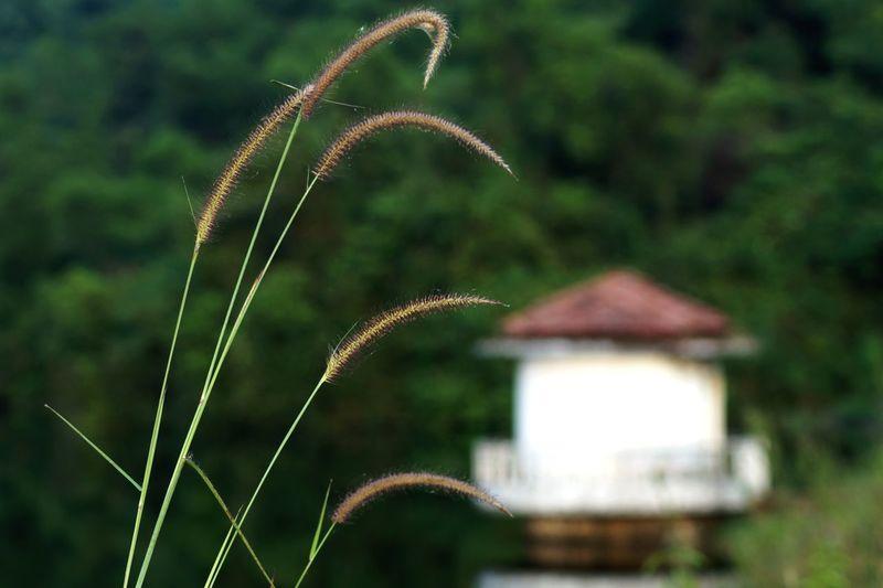 Lakesideview Lovelyspot Love Nature Greenery Beautiful Watereverywhere Me (^3^) .