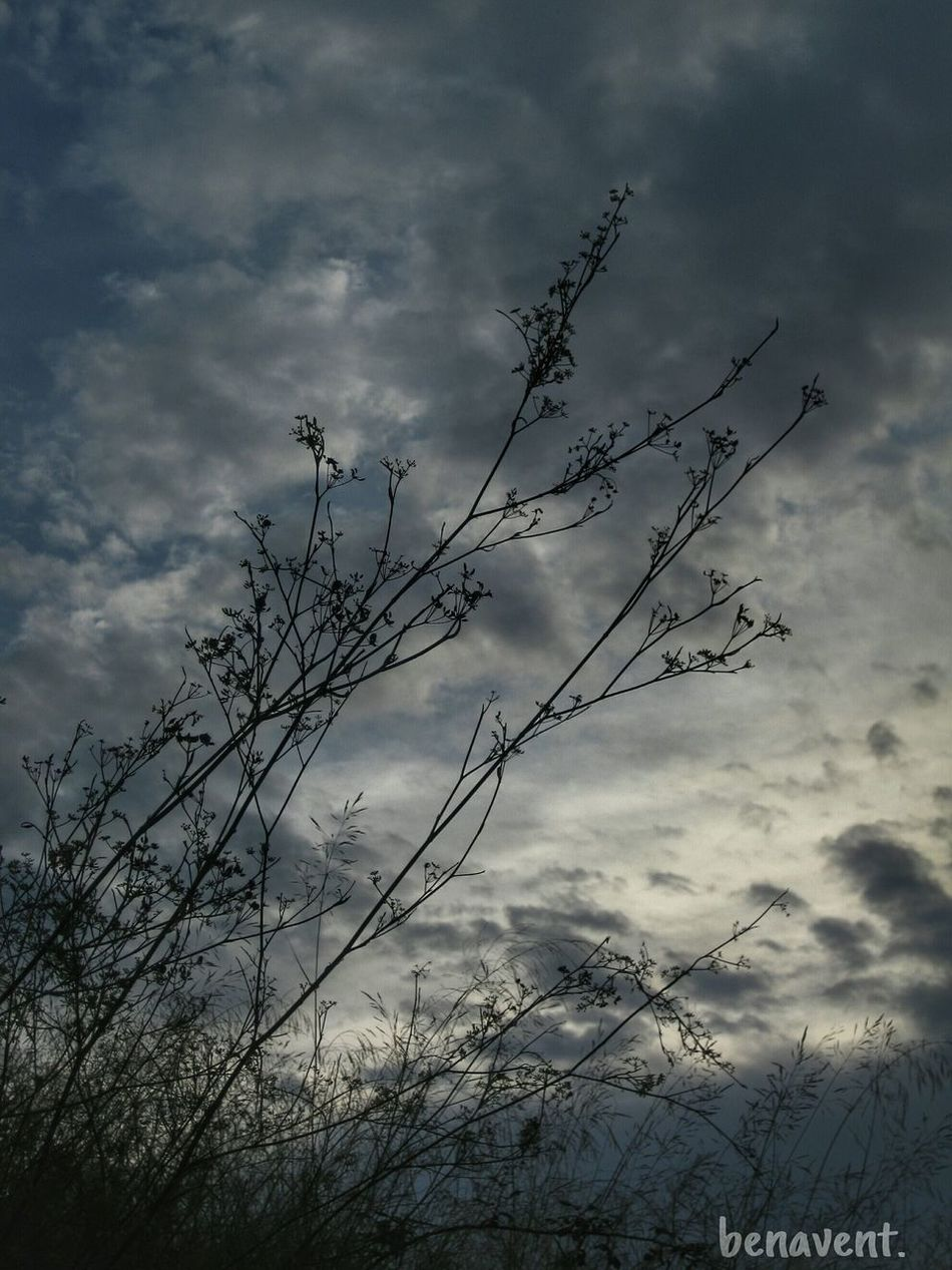 Brossa Hierba Herba Núvols Núvols I Cel País De L'olivera La Safor