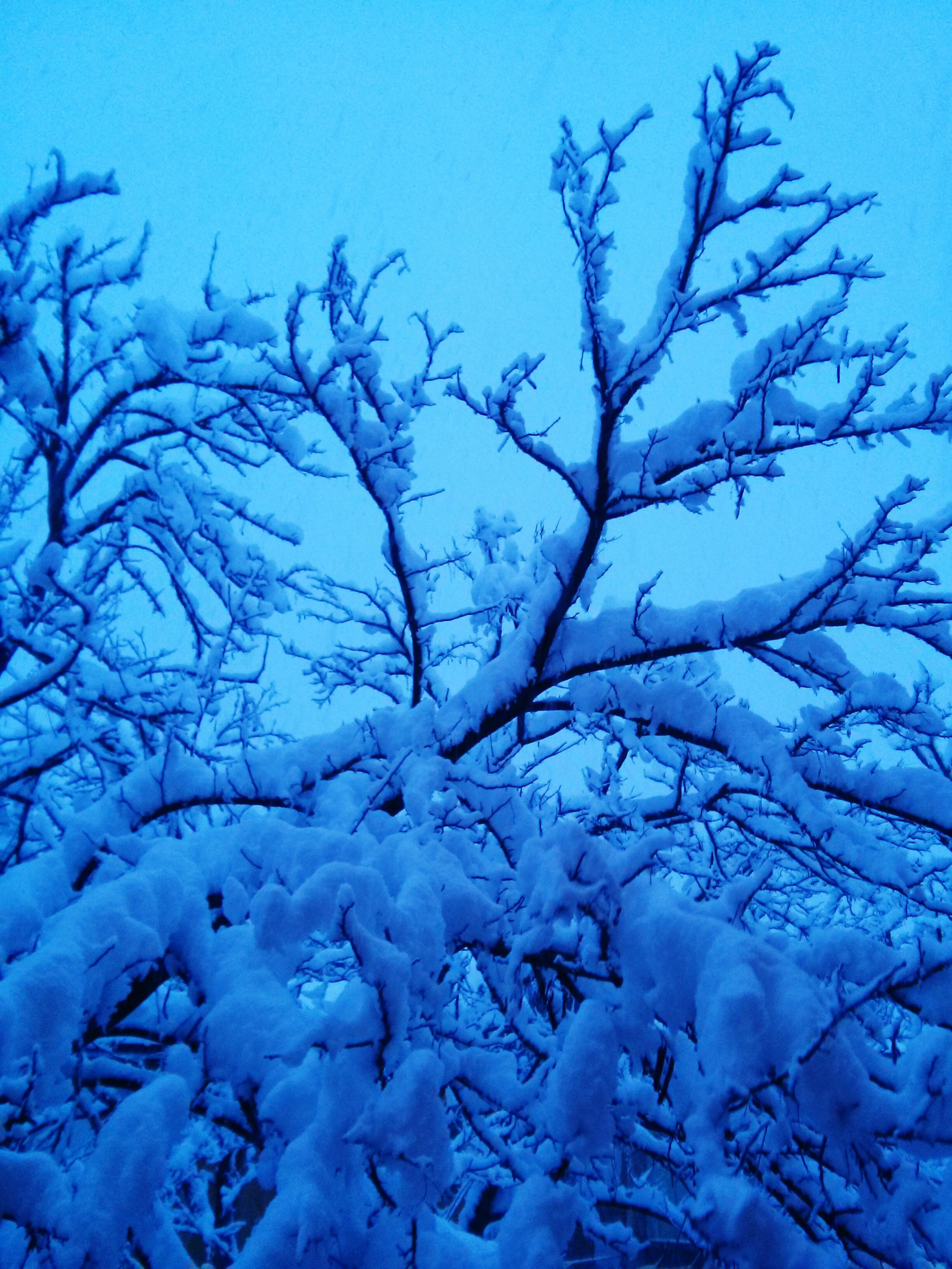 bare tree, blue, clear sky, branch, tranquility, nature, beauty in nature, tree, tranquil scene, winter, scenics, cold temperature, low angle view, sky, season, snow, outdoors, day, no people, copy space