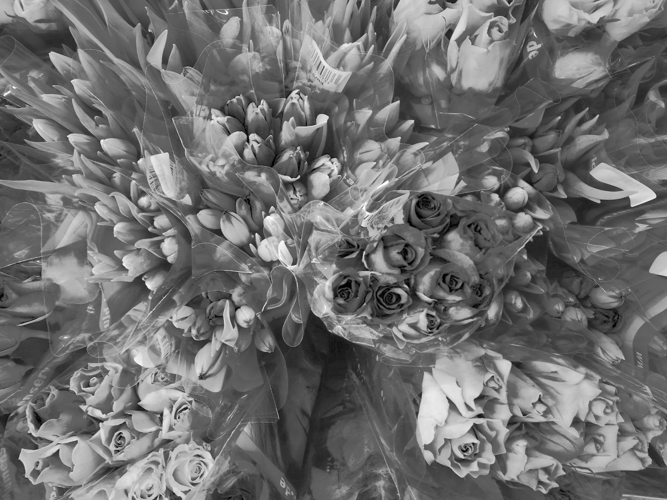 Imagine flowers with no colours, Mr. Trump Flower Full Frame Close-up Beauty In Nature No People Nature Day Fragility Flower Head Fresh On Eyeem  Pastel Colors HuaweiP9Photography Huawei P9 Leica Supermarket Roses Flowers  Tulip MonochromePhotography
