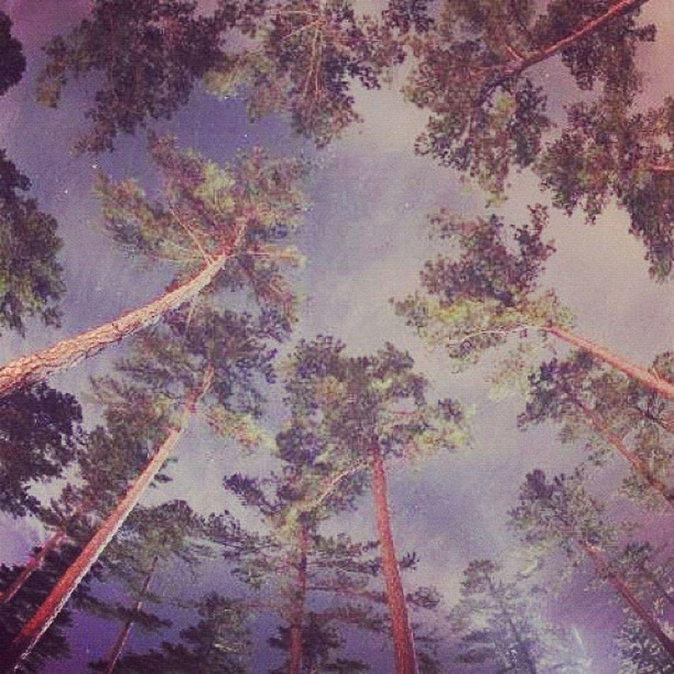Look up! Woods Jj_forum_0370 Fisheye Instamillion Texas Photooftheday GCS Igers IGDaily Jj  Instagood Igscout Instaaaaah Instagramhub Jj_forum The_guild Primeshots Trees Gmy