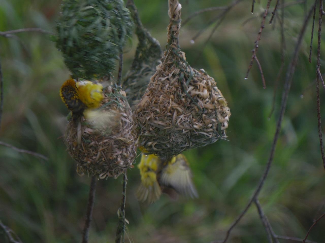 Caught In The Act Hanging Around Enjoying Life Birds Birds Wildlife