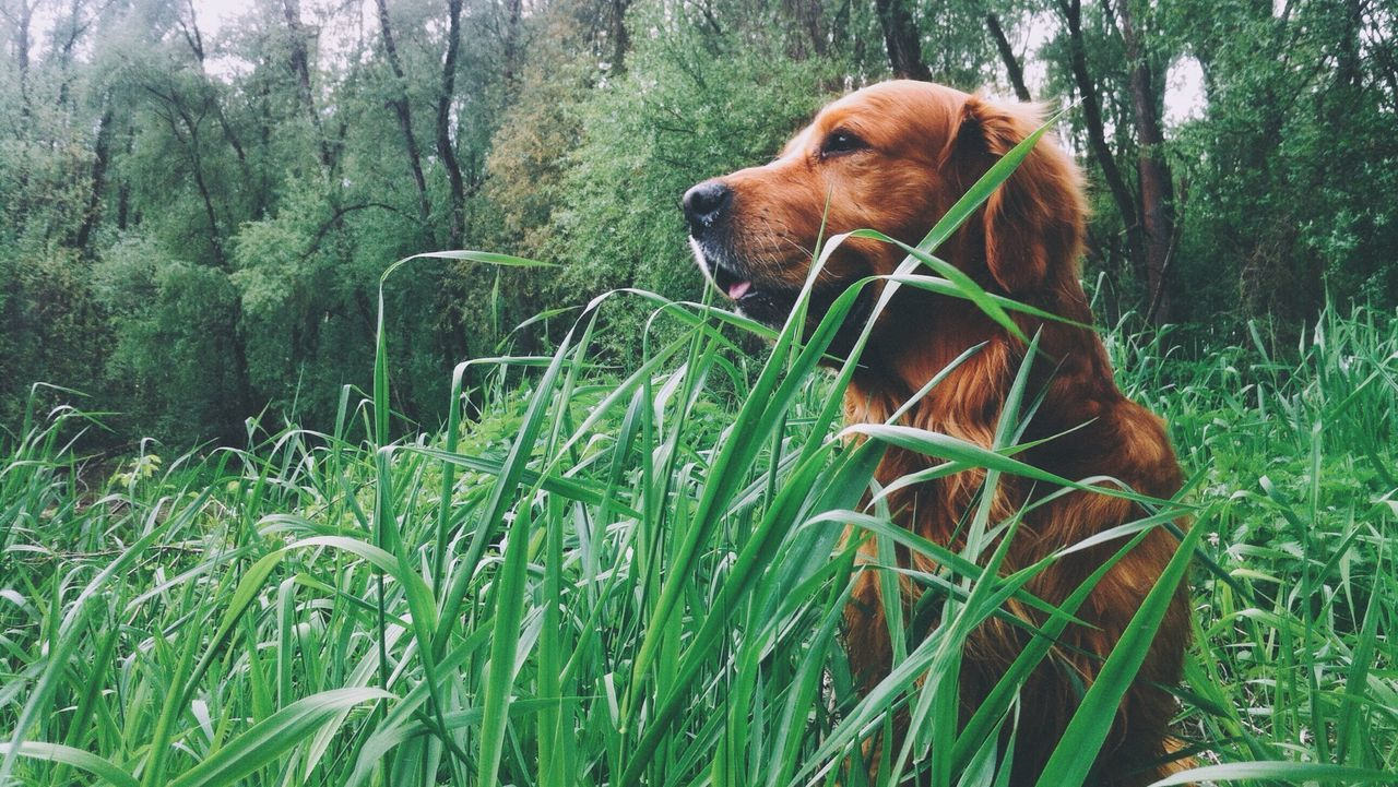 Beautiful stock photos of dogs, Animal Themes, Beauty In Nature, Brown, Day