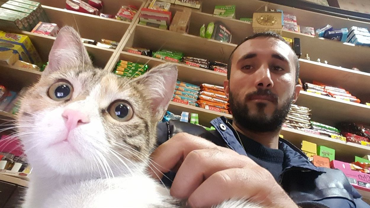 Cat Cats 🐱 Cats Selfie✌ Self Portrait Selfie ♥