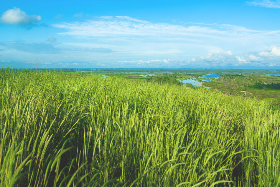 Beautiful stock photos of russia, Blue, Countryside, Day, Grass