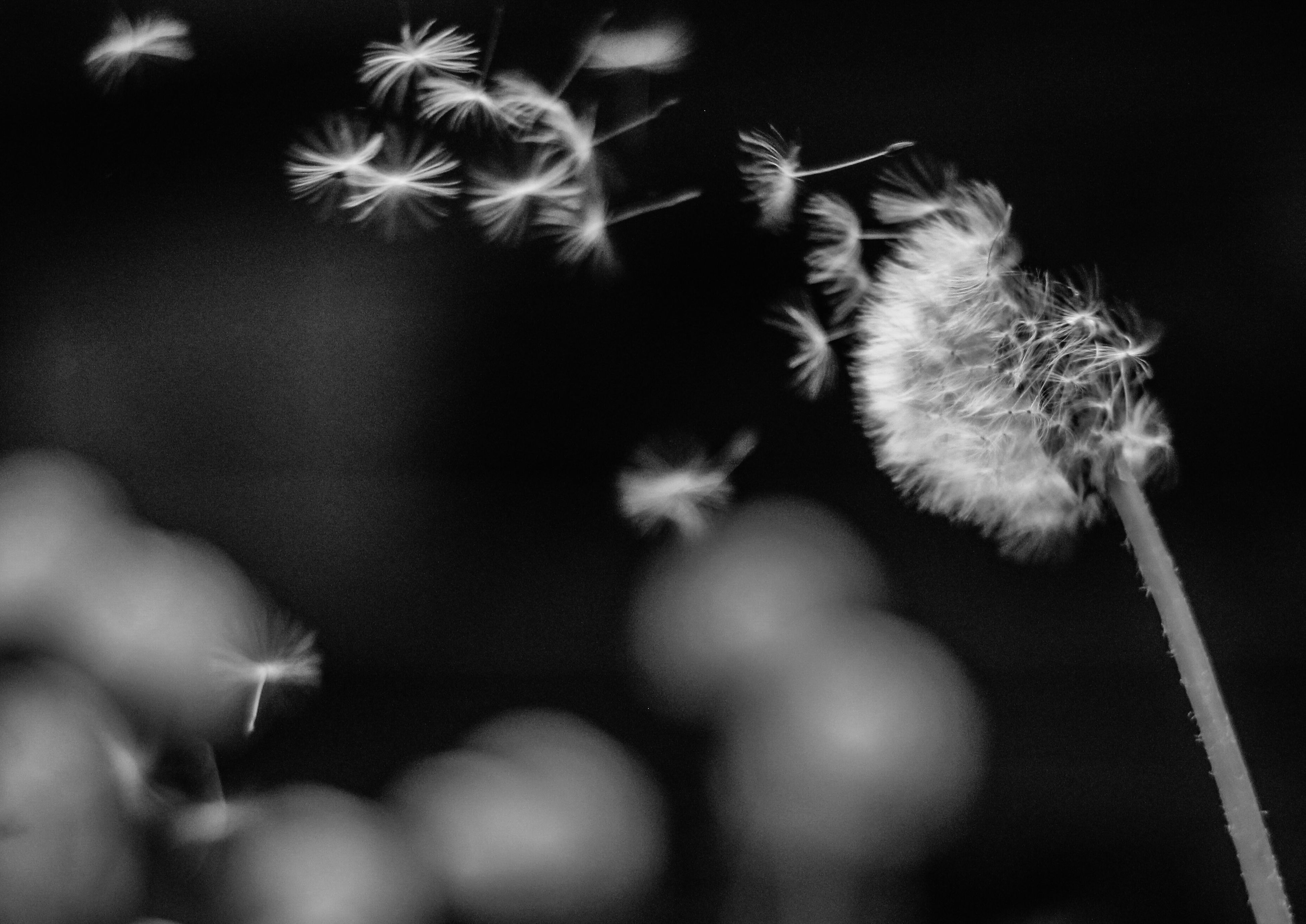 focus on foreground, animal themes, one animal, flower, selective focus, close-up, nature, outdoors, fragility, day, growth, no people, dandelion, stem, pets, freshness, low angle view, plant, wildlife, white color
