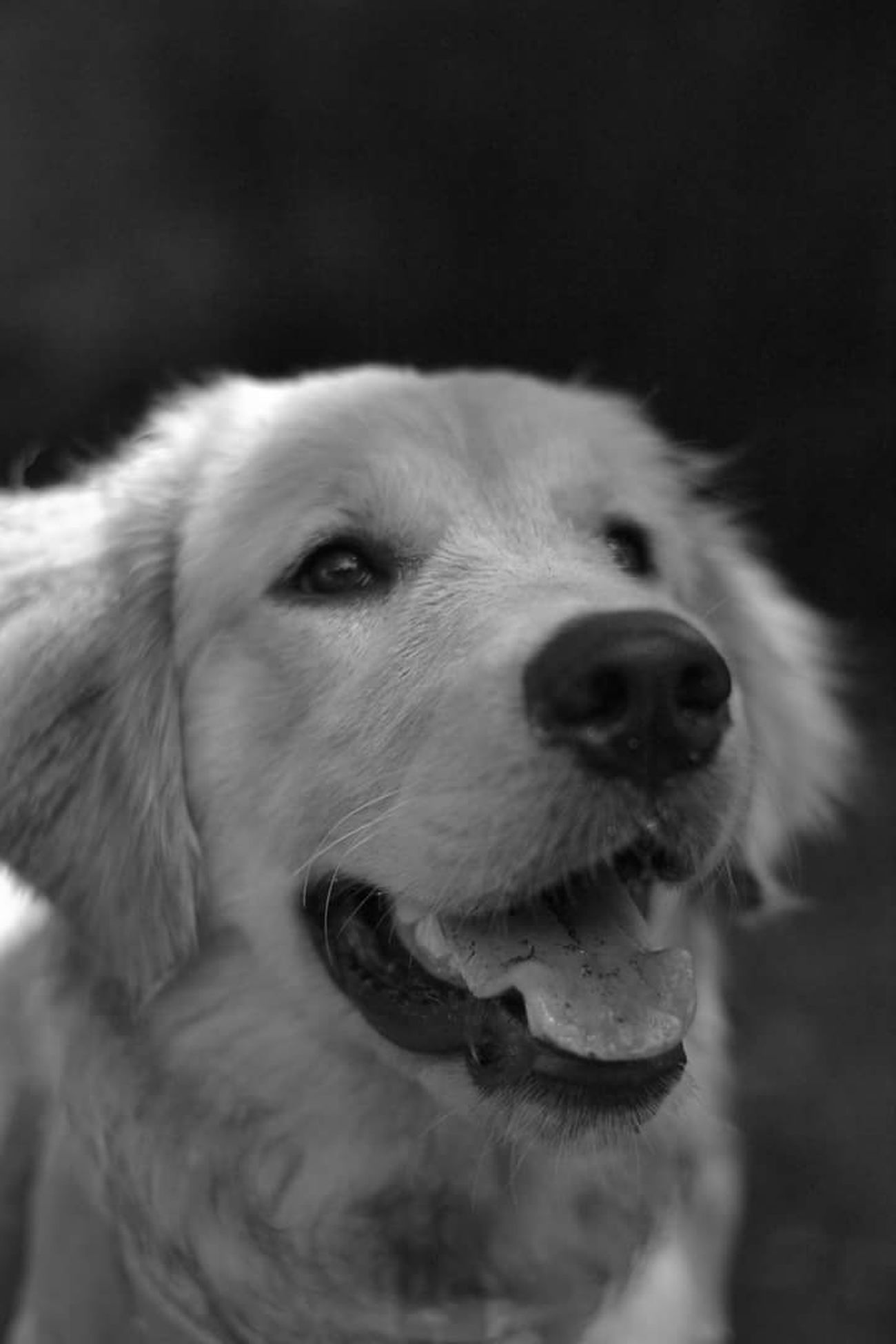 Dog One Animal Pets Domestic Animals 3XSPUnity Black And White Photooftheday Street Life Sreetphotographer Black & White Streetphotography Photo Close-up Street Day